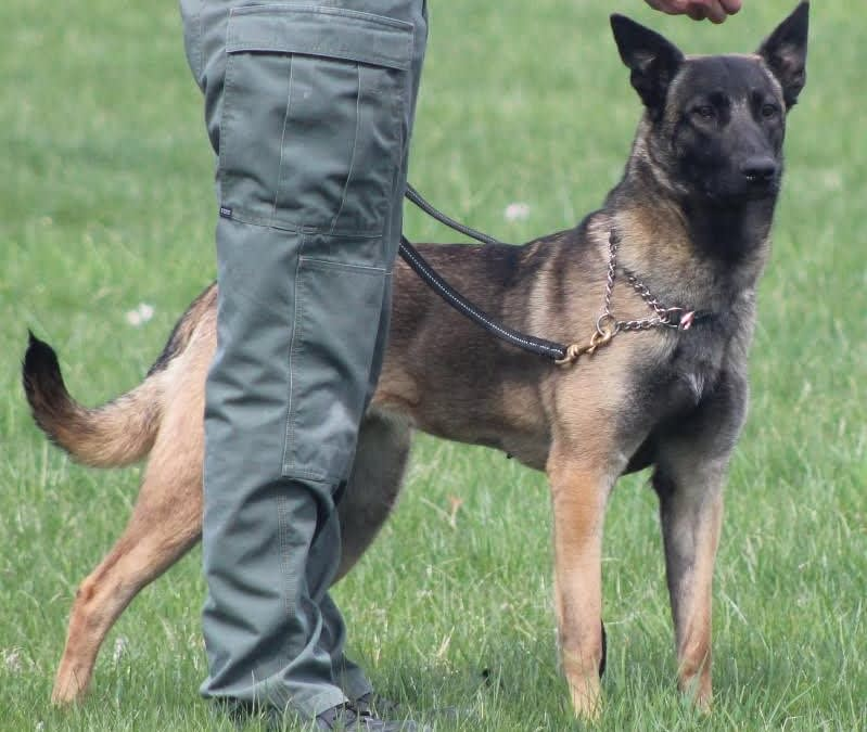 What started as a K9 training group …